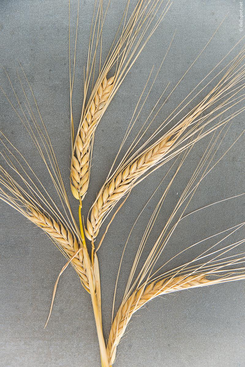 Getreide – DELISPOT Küchenkompendium